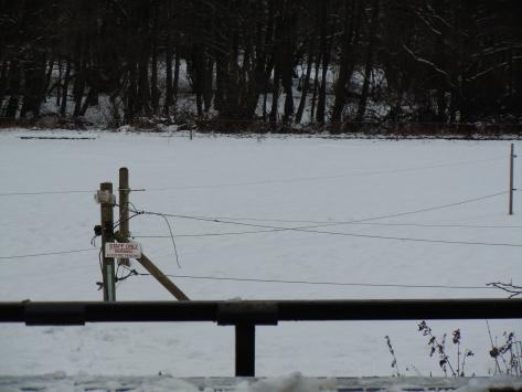 Paddocks under snow