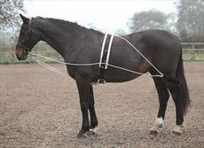 Shires lunging aid advertising photo